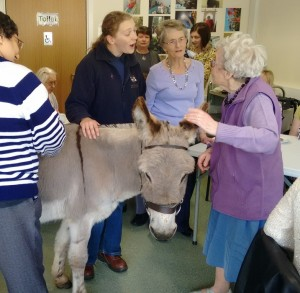 A visit from the Donkey Sanctuary